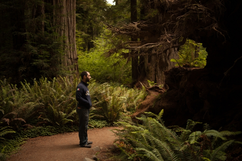 Hank marvels at a fallen tree in the Redwood National Forest.